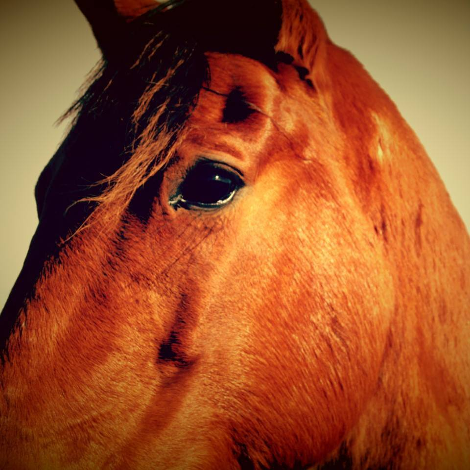 Why Horses Are Good For The Soul